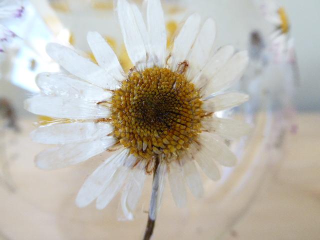 Meadow flower glass tea light holder